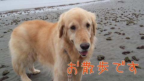 Yuzu_2
